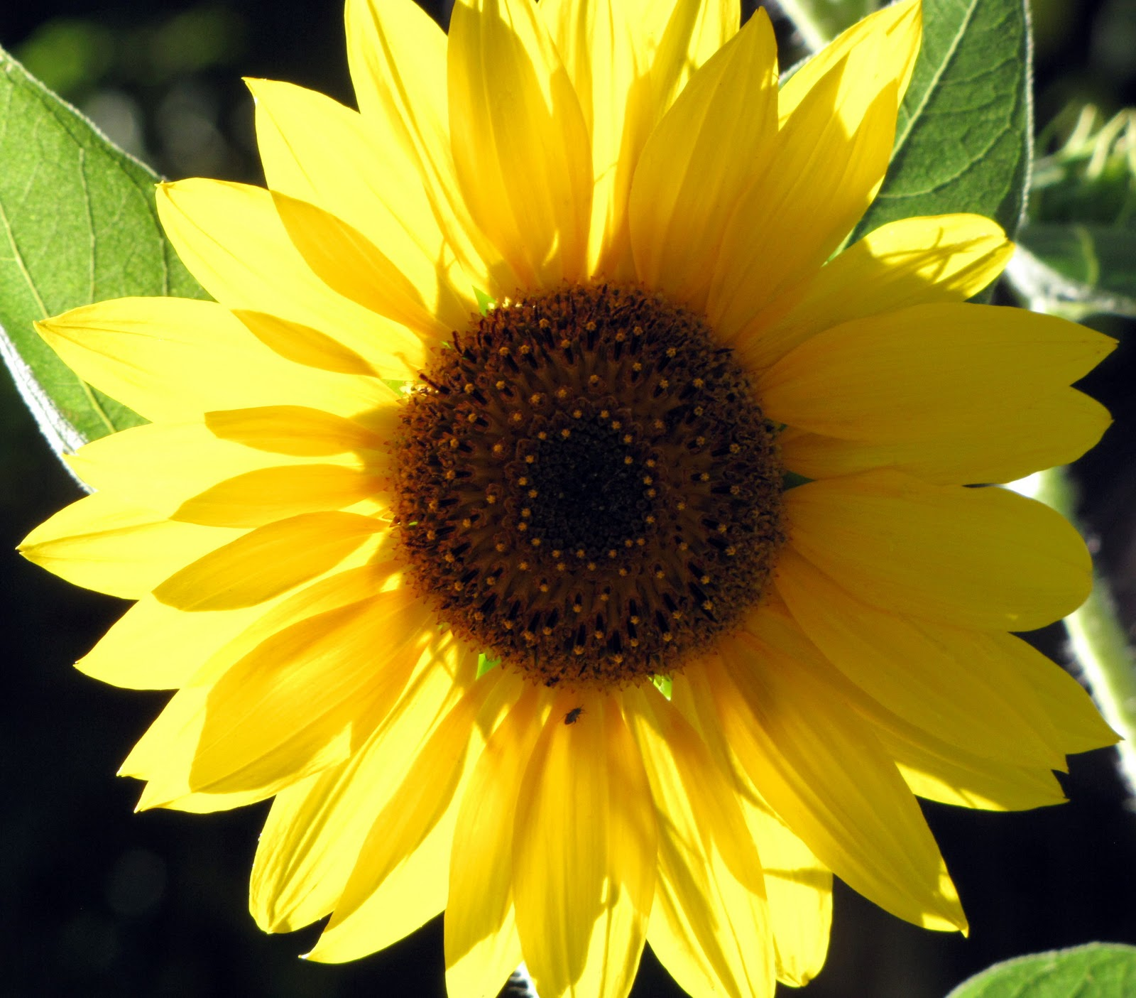 interleafings  bloom day