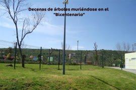 DECENAS DE ARBOLES MURIENDOSE EN QUERETARO