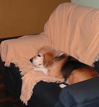 WillY,nosso lindo e danado cão