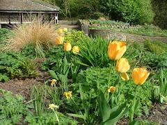 Snuff Mills garden in Spring