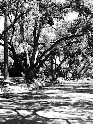 Black And White Paintings Of Trees. lack and white paintings