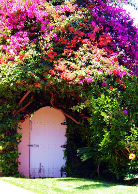 bouganvilla+gate Fall Foliage, South Pas Style  photo