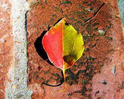 yin+yang+camphor+leaf Taijitu  photo