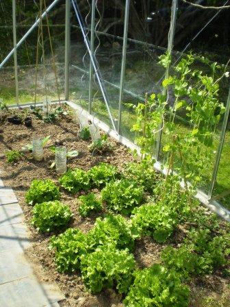 serre de jardin fait maison