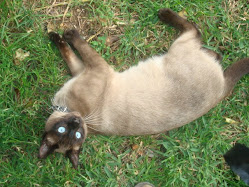 Pepe, o meu gato.