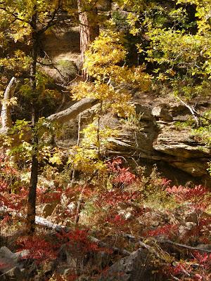 Oak Creek Angler Fall Browns Chevelon Canyon Creek Oct