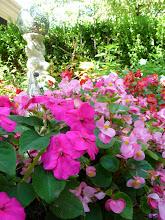 Katie's Passion Garden