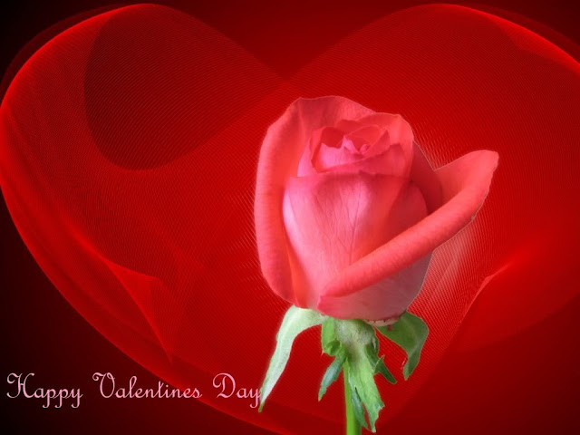 Beautiful Red Rose Valentine Wallpaper - free download wallpapers