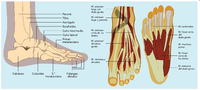 blog_diana: Colocación de pies