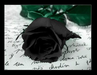 ....Fotos... Rosa+negra+y+texto