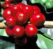 O que é Café organico ? Images