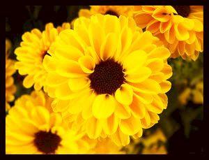 Avatare cu flori