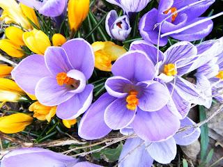 Poze cu flori