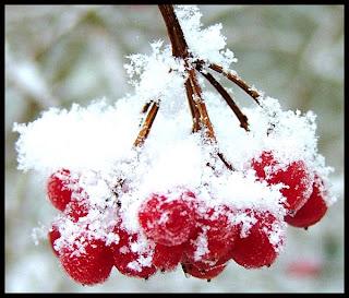 imagini iarna