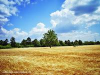 peisaje de vara