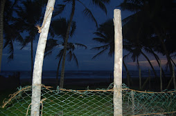 sun has gone behinde the coconut trees
