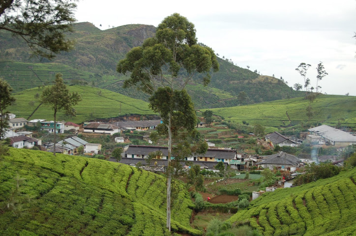 a tea estate with dwelings