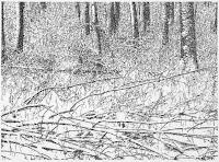 Richard Müller: Winterzeichnung 2