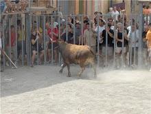 Fiestas de Verano en Castellnovo