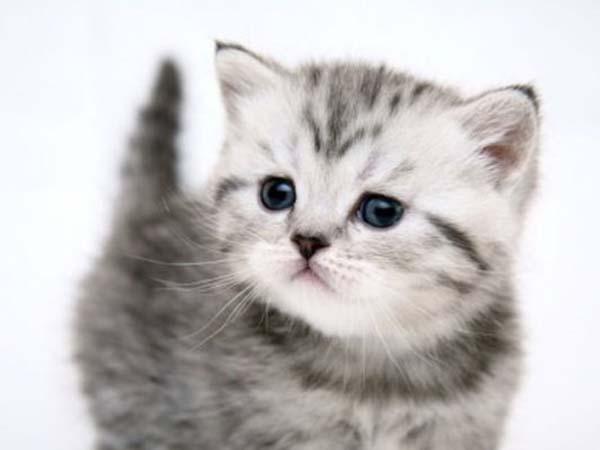 kitties love christmas   oddetorium