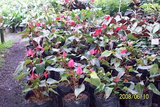 Plantas plantas ornamentales de sombra moderada for 20 plantas ornamentales