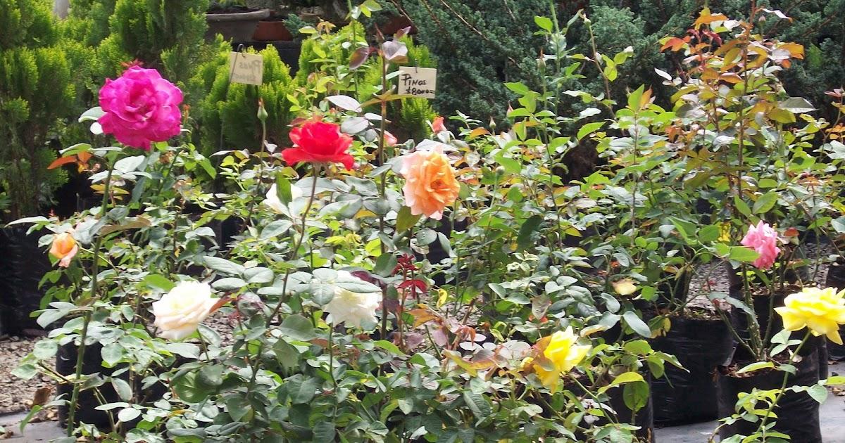 Plantas plantas ornamentales de sol for 4 plantas ornamentales