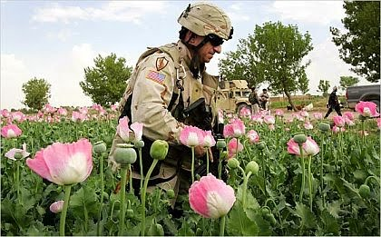 The rag blog follow the poppies opium afghanistan and us soldier among the poppies at opium field in afghanistan image from aftermath news working with the warlords afghanistan and the heroin trade mightylinksfo