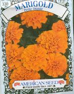Marigold (Petite Orange)