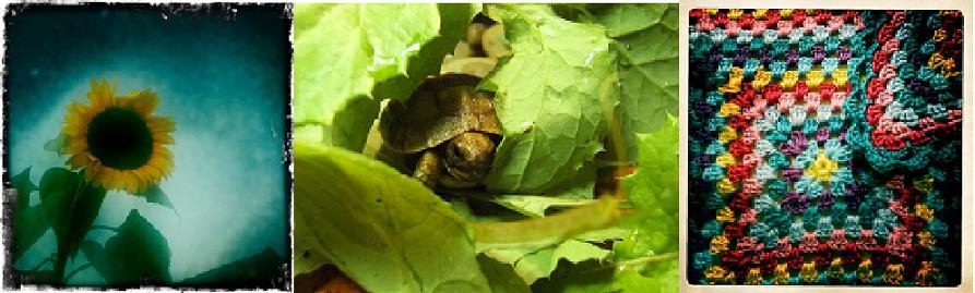Urban Tortoise