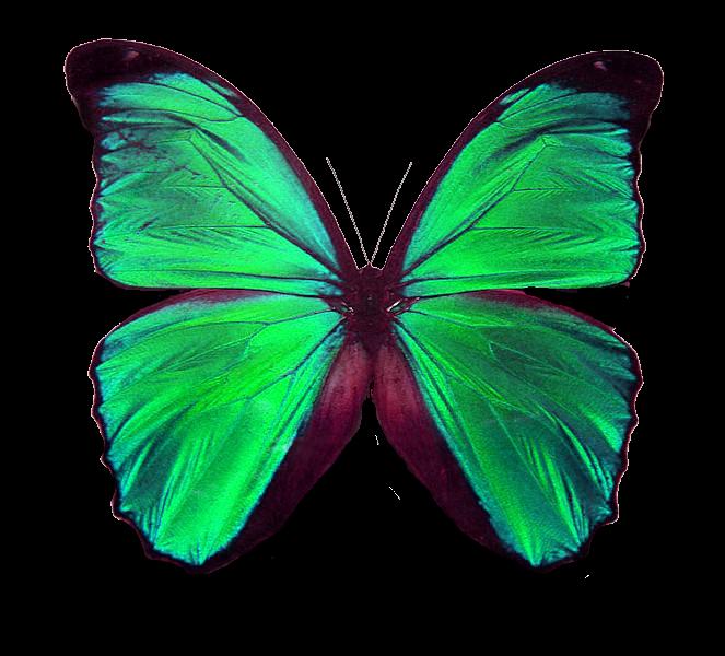 Mariposa png - Imagui