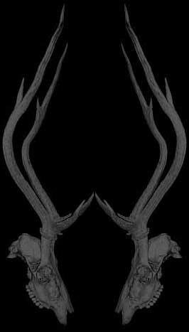 [deer+skull]