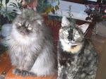 gatitos, a alegria da casa