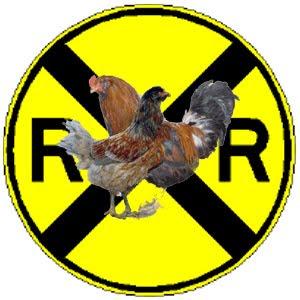 Chickens. Railroad tracks. Chickens on railroad tracks.