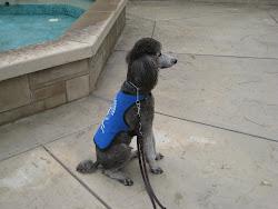 Puppy #1 - Leon