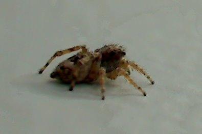 [Spider.jpg]