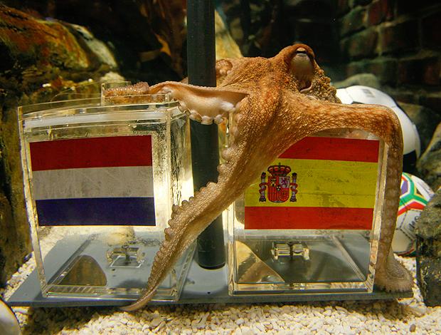 polvo, polvos, espanha, petiscos, peixe, molusco, lula, campeao copa 2010 espanhola, espanhois campeoes copa 2010, espanholas campeas copa 2010, polvo