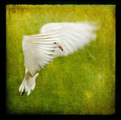 White Bird Landing