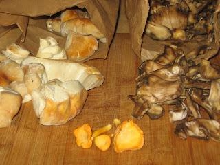 The Foraging Family: Three Edible Summer Mushrooms: Berkeley Polypore ...