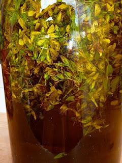 Johanniskrautöl - Ernte mit Verspätung