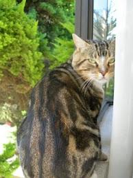 Jujito, mi gato...