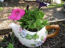 Petunia in a Tea Pot