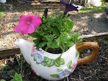 Petunia in a Tea Pot