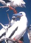...some birds....