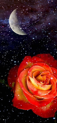 Moon and Rose. by Sadiq