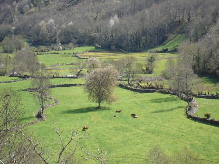 El Valle de Moal