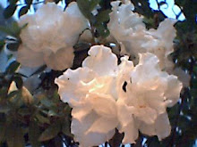 Flores de um fã