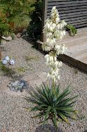 Min blommande palmlilja