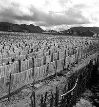Bom Nome (Pernambuco, Brasil) - 1947-1951