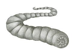 Larva da morte da Mongólia