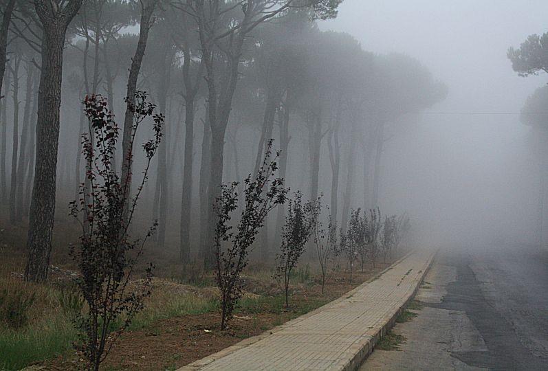 Bois de Boulogne  Mount Lebanon  Lebanon ~ Bois De Boulogne Lebanon